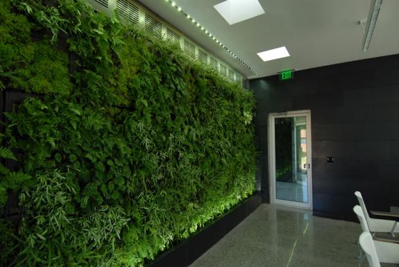 Harvested rainwater supports the living walls which filter toxins from the air in the classrooms and lounge