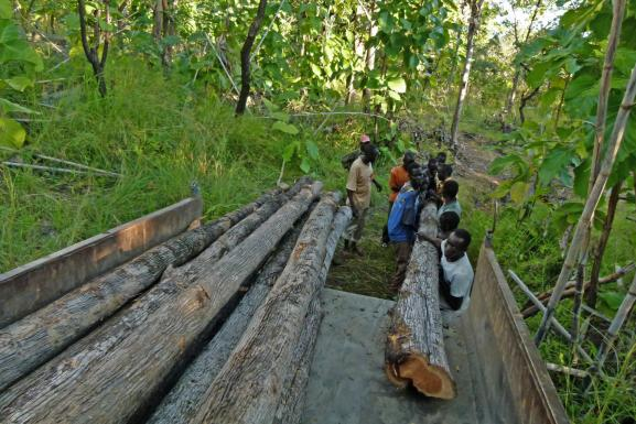 fetching Teak poles in the forest