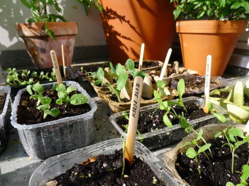 Campus gardening