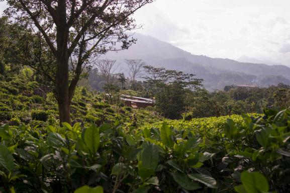 The plot is situated in the middle of tea plantages overlooking the small city of Rakwana